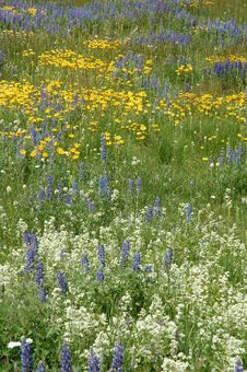 Free Wild Flowers Royalty Free Stock Images - 5821109