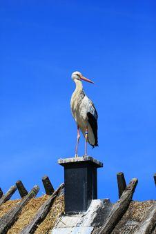 Free Stork Stock Image - 5821811