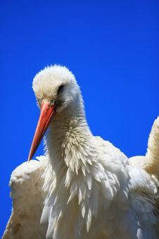 Free Stork Royalty Free Stock Images - 5821929