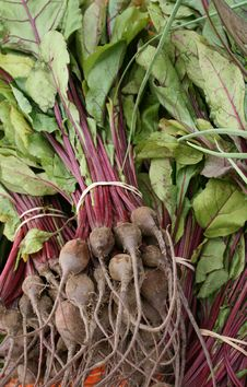 Free Fresh Beets 2 Stock Photography - 5822202
