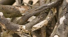 Free Tree Root Stock Images - 5822854