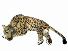 Free Sleeping Jaguar Royalty Free Stock Images - 5823009