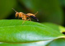 Free Wasp Stock Photos - 5823963