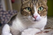 Cat On Alert Stock Images