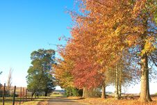 Autumn Landscape With Tarred Road And Fence Stock Photography