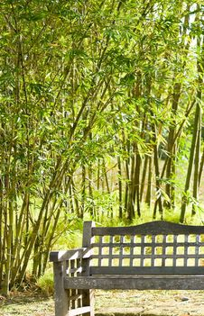 Bench In Bamboo Grove Royalty Free Stock Photos