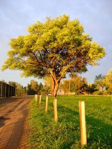 Tree And Road Stock Photo