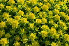 Free Sun S Flowers Stock Photo - 5828920