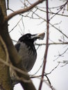 Free Crow With Fish S Head Royalty Free Stock Photos - 5830918