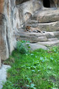 Free Leopard In The Moskow Zoo Royalty Free Stock Images - 5833779