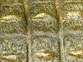 Free Crocodile Skin Texture Stock Photography - 5837232