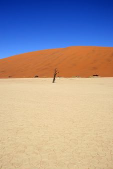 Dead Acacia Trees At Dead Vlei, Namib Desert Stock Photo