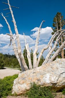 Free High Sierra, California Landscape Stock Photography - 5830662