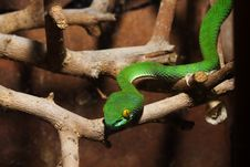 Free GREEN SNAKE Stock Photography - 5830802