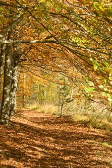 Free Autumnal Forest Path Stock Photos - 5830813
