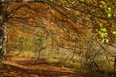 Free Autumnal Forest Path Stock Photography - 5830882