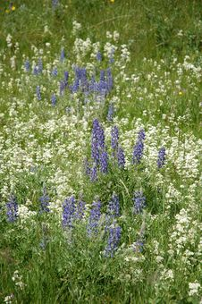 Free Wild Flowers Field Stock Images - 5831744