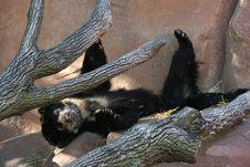Free Bear Stock Image - 5831871