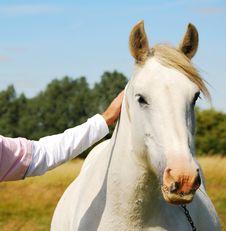 Free White Horse Stock Image - 5832521