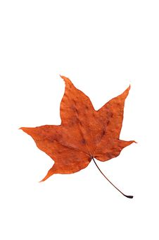Free Maple Autumn Leaf Stock Photos - 5833243