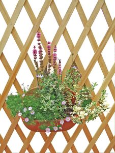 Free Railings And Flower Stock Images - 5833324
