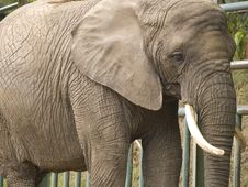 Free Elephant Stock Photo - 5833340