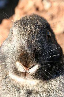 Free Rabbit Royalty Free Stock Photos - 5833868