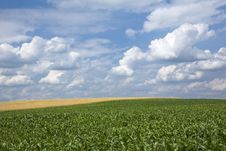 Free Landscape With Wheat And Maize Stock Images - 5834794