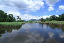Free Wetland Stock Image - 5836271