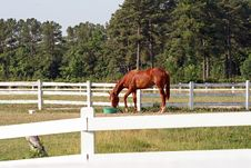 Free A Horse Eating Breakfast Stock Photography - 5836422