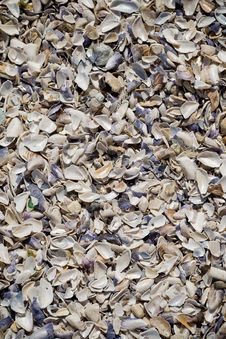 Free Sea Shells Texture Stock Images - 5836474