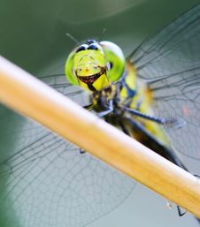 Free Dragonfly Royalty Free Stock Photography - 5837287