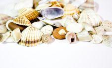 Free Seashells Royalty Free Stock Photo - 5837895