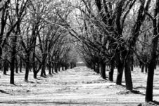 Free Stark Winter Orchard Royalty Free Stock Photography - 5838677