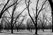 Free Stark Winter Orchard Stock Photo - 5838750
