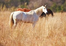 Free White Horse Stand In Long Grass Stock Photos - 5839243