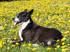 Free Dandy Puppy Stock Photos - 5839513