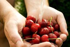 Free Cherry Royalty Free Stock Image - 5839776
