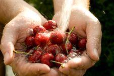Free Cherry Stock Image - 5839791