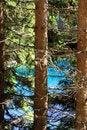 Free Pine Tree Trunks On Blue Lake Royalty Free Stock Photos - 5845828