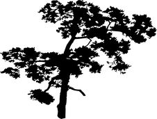 Free Isolated Tree - 40. Silhouette Stock Images - 5840254