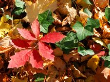 Free Autumn Leaves Royalty Free Stock Photography - 5840737