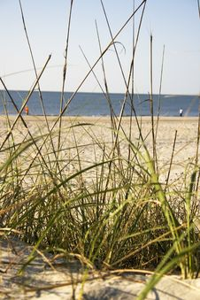 Grass On The Beach Royalty Free Stock Photography