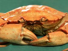 Free Steamed Crab Royalty Free Stock Images - 5841879