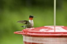 Free Humming Bird Royalty Free Stock Images - 5842159
