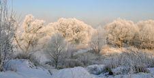Free Winter Landscape Royalty Free Stock Photo - 5842615