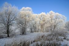 Free Winter Landscape Royalty Free Stock Photography - 5842657