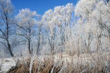 Free Winter Landscape Royalty Free Stock Photo - 5842695