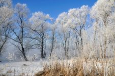 Free Winter Landscape Royalty Free Stock Photography - 5842697