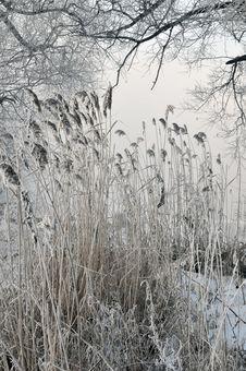 Free Winter Landscape Stock Image - 5842851
